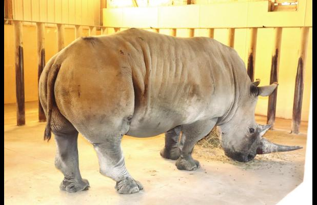 Introducing a new resident at Rolling Hills Zoo