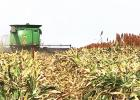 Welcome Fall harvest of crops